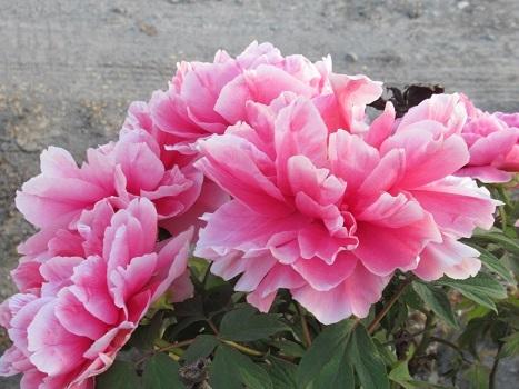 IMG_5598.jpg