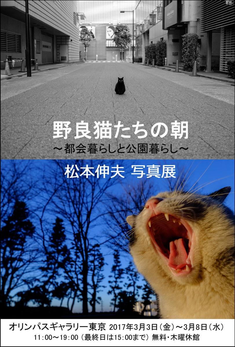 野良猫たちの朝「