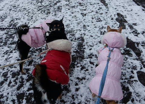 うっすら雪の散歩