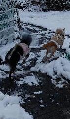 雪コチャ2