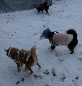 雪 3わん