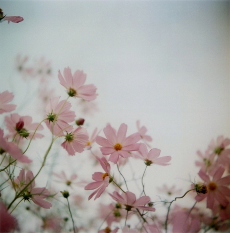 TOY-1749_Yashica.jpg