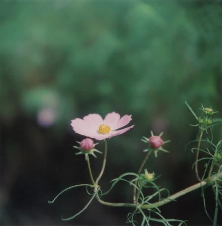 TOY-1769_Yashica.jpg