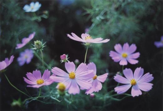 TOY-1792_Nikon.jpg