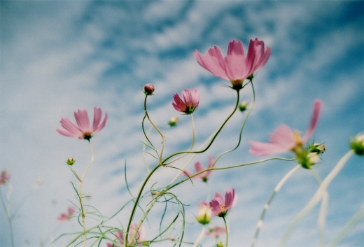 TOY-1806_Nikon.jpg