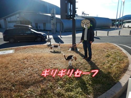 DSCN0496_20170103224912b84.jpg