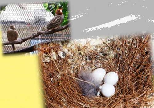 第一号孵化