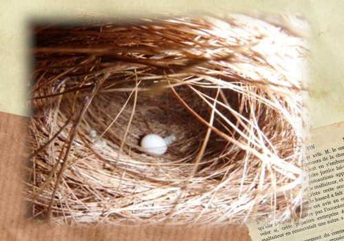 皿巣に産卵