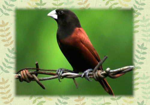 キンパラ欲しい鳥