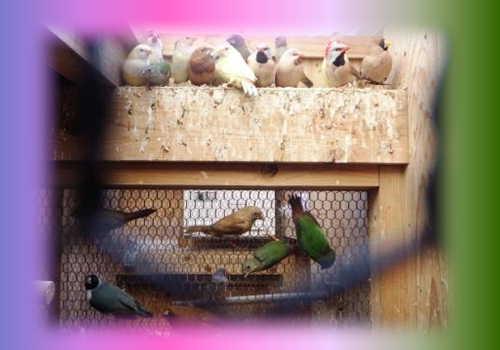 春待ちの小鳥達2