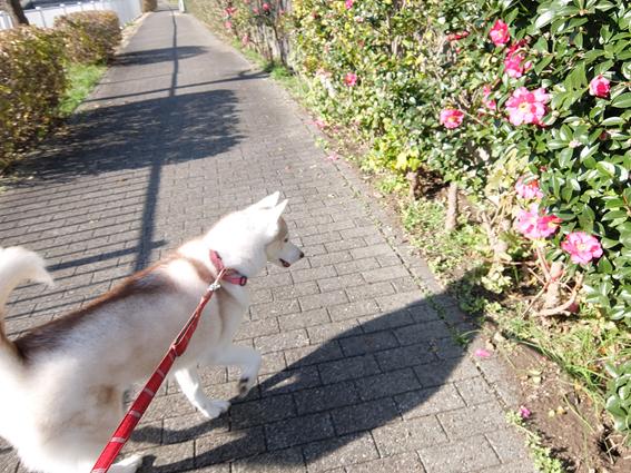 161203 散歩03