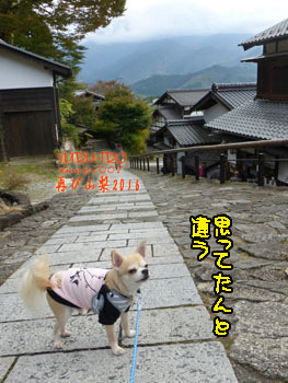 2016yuruiro_1103_k006
