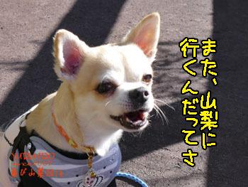 2016yuruiro_1101_k003