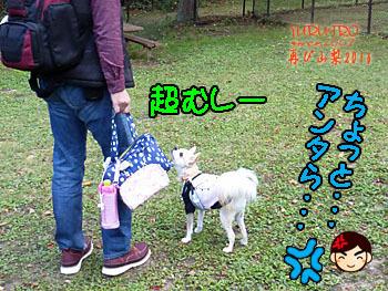 2016yuruiro_1104_k009