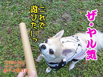 2016yuruiro_1107_k012