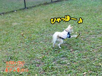 2016yuruiro_1107_k013