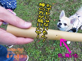 2016yuruiro_1107_k014