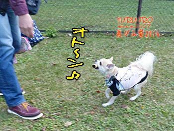 2016yuruiro_1107_k016