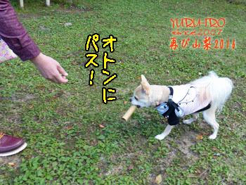 2016yuruiro_1107_k018