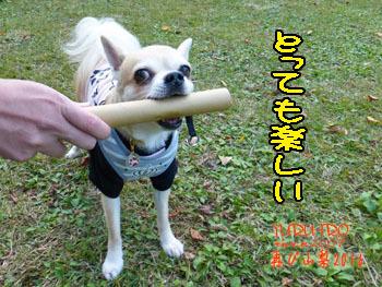 2016yuruiro_1107_k019