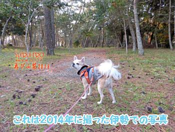 2016yuruiro_1103_k014