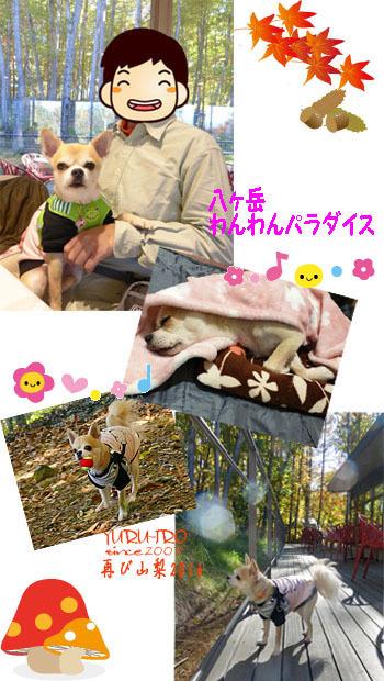 2016yuruiro_1109_k004