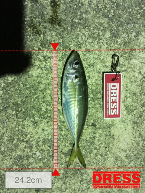 GS店長さん釣果1
