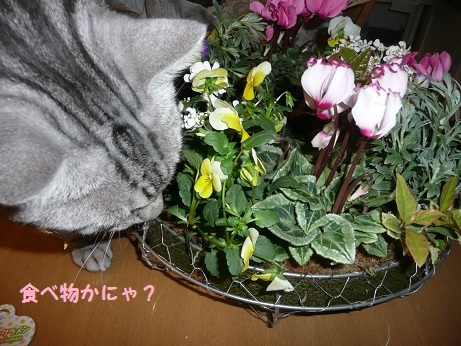 P1130813.jpg