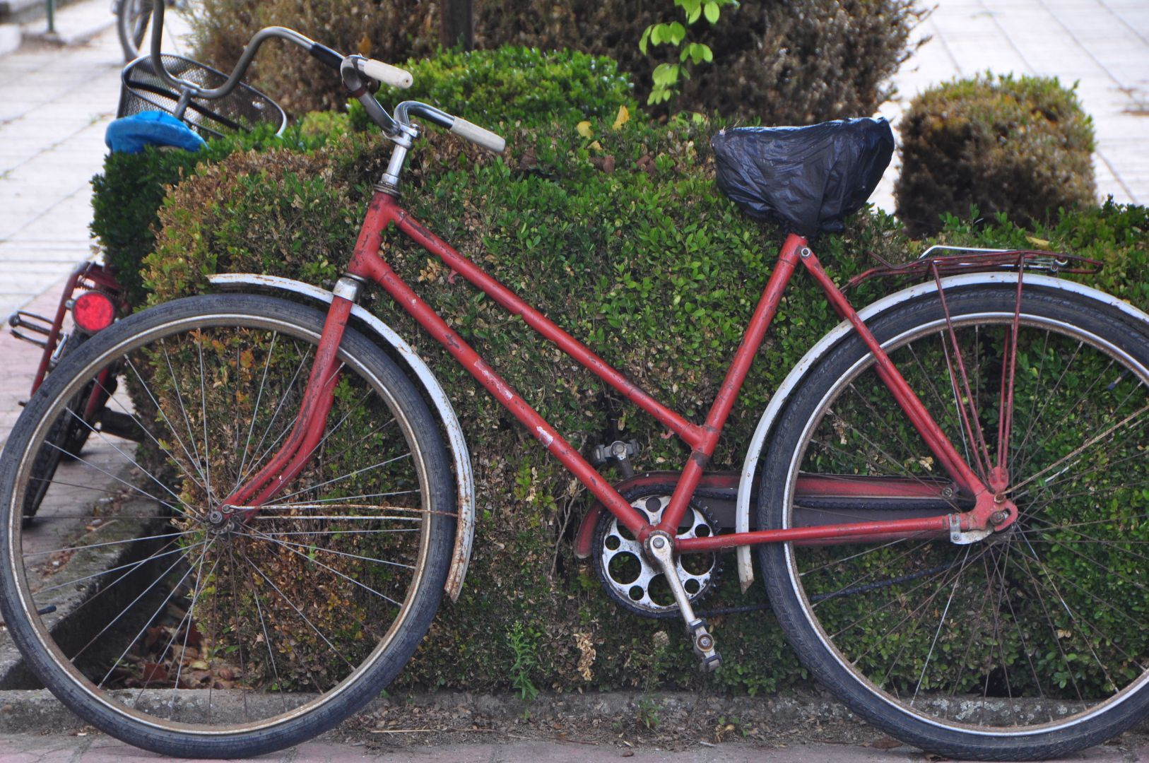 local bike