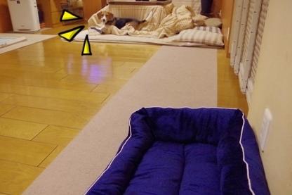 ベッド 2