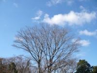 P1120922裸木