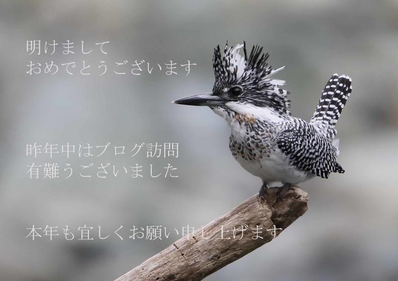 謹賀新年A91K7866じ