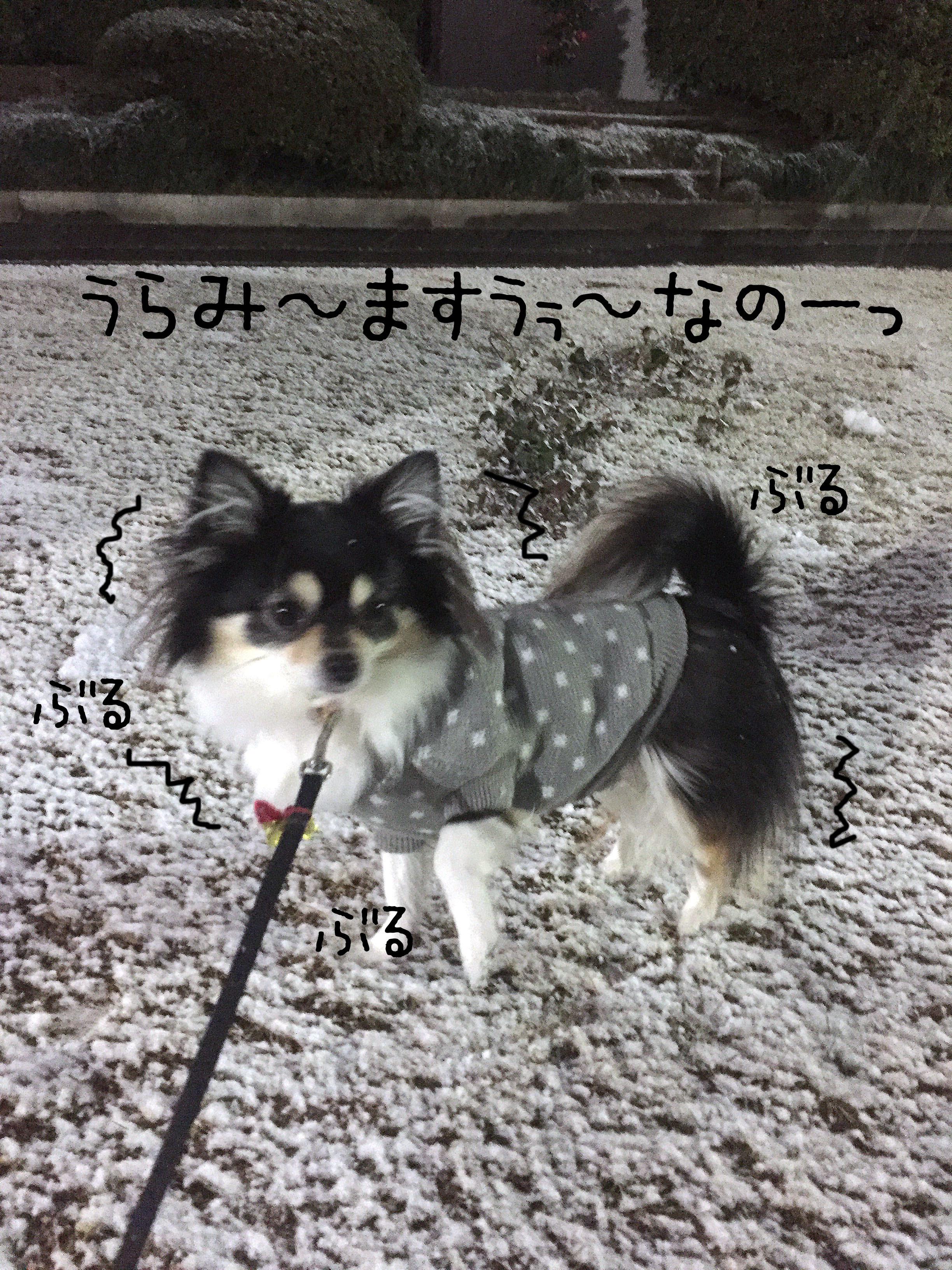 1701あんと雪02