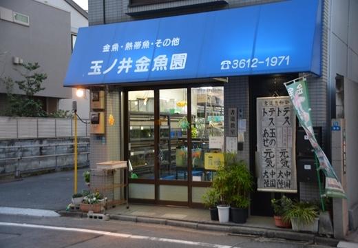 161125-161539-鐘ヶ淵・玉ノ井20161125 (204)_R
