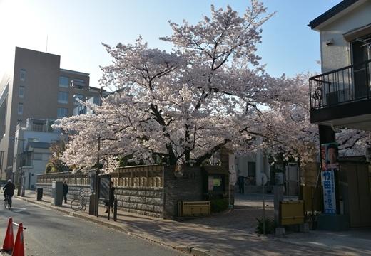 150331-161809-桜の街2015 (392)_R