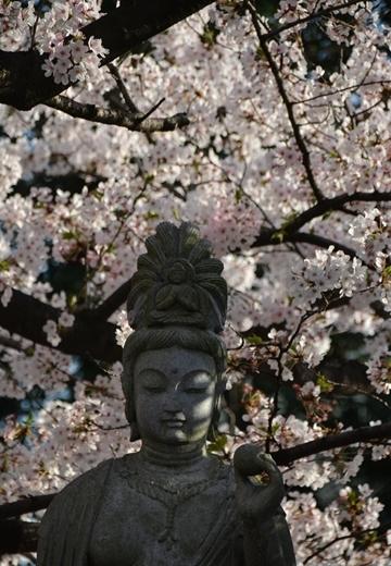 150331-162035-桜の街2015 (420)_R