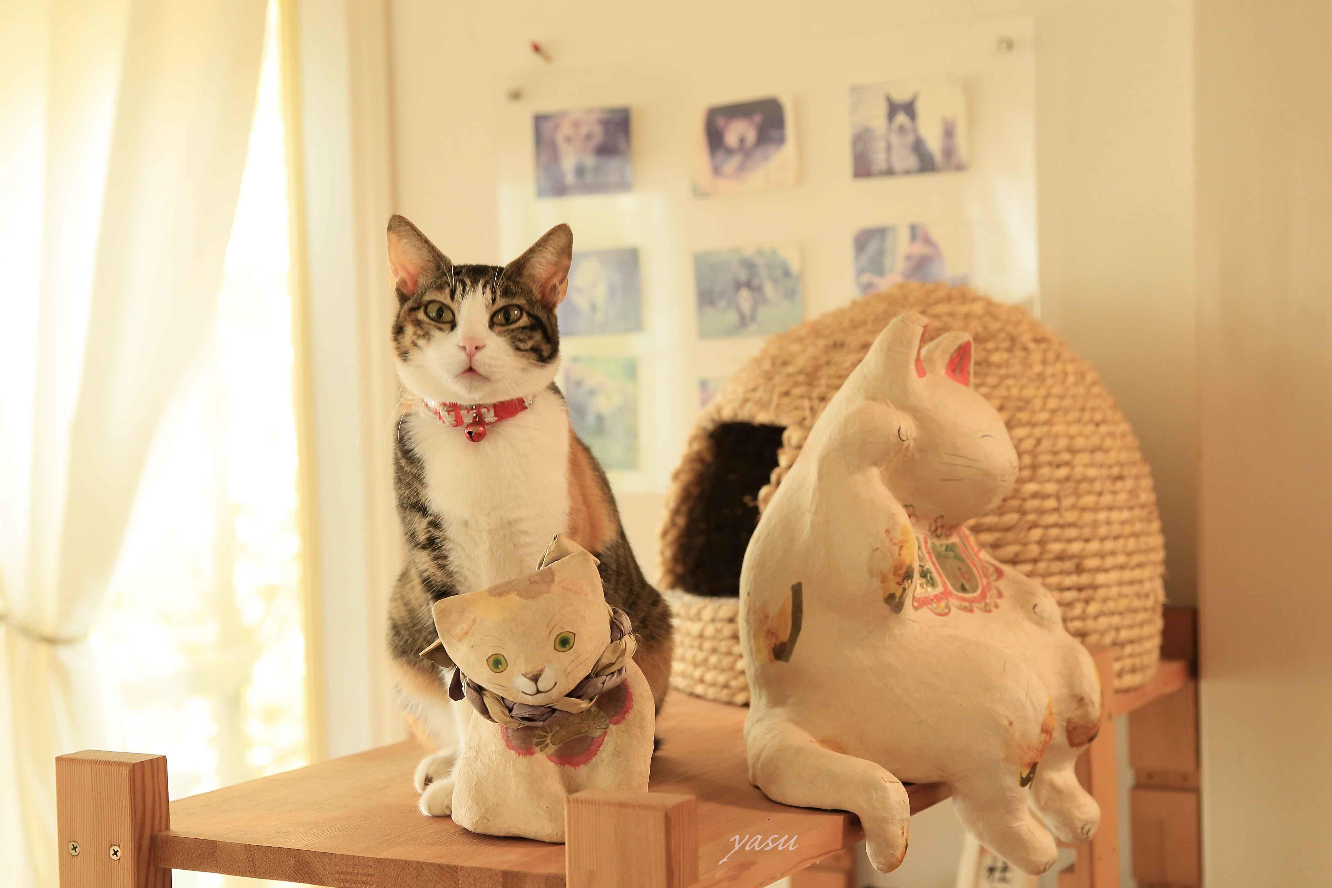 みけ招き猫y032A3945