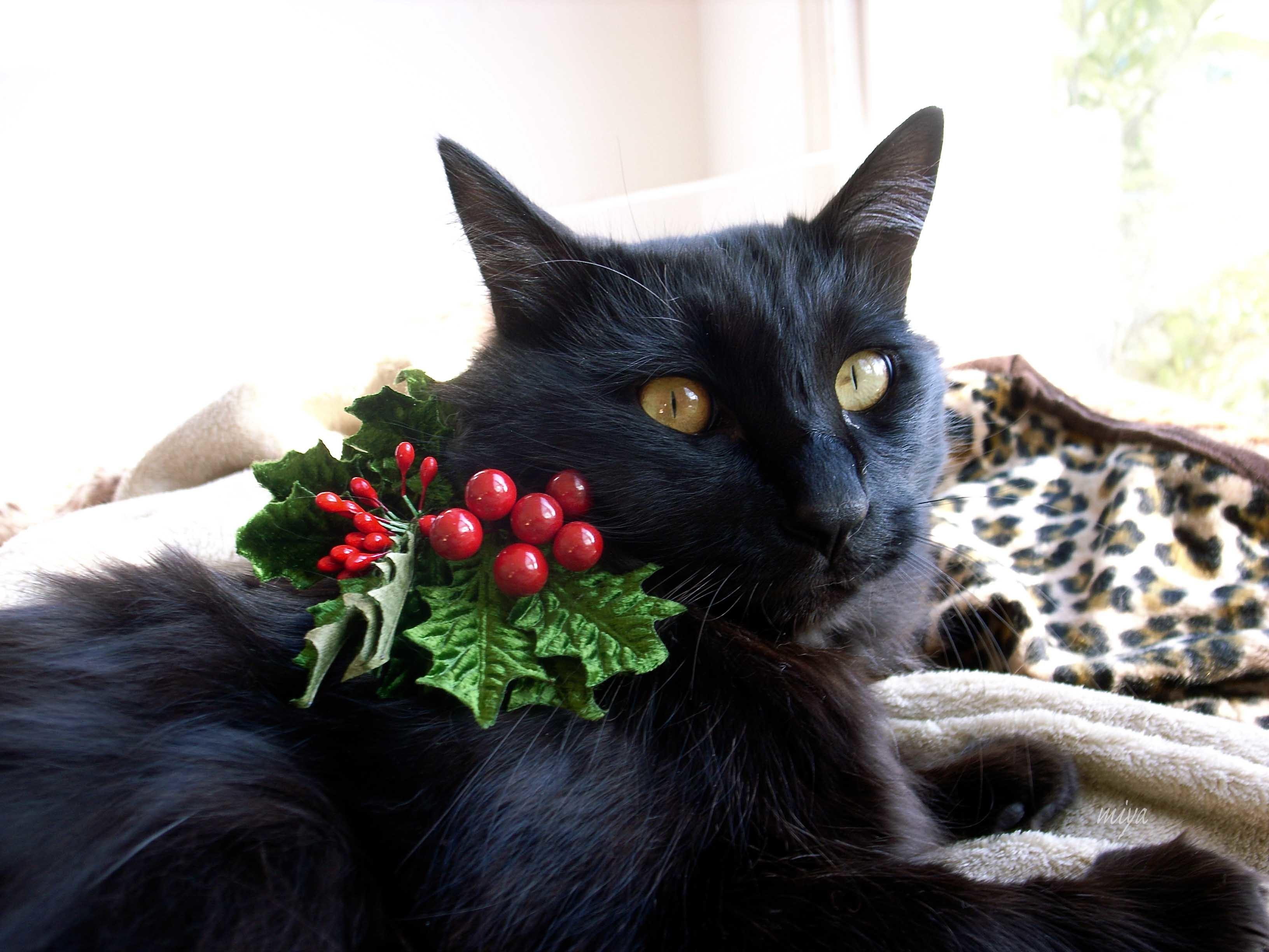 くろクリスマスmR0018629