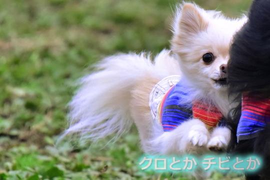 540px20161124_MiTo-01.jpg