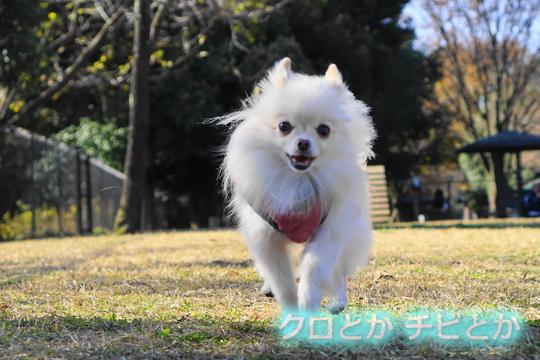 540px20161207_MiTo-04.jpg