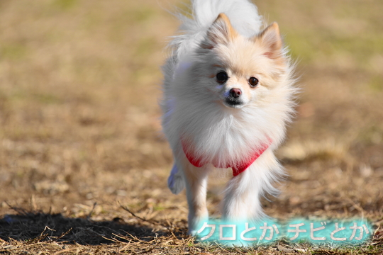 540px20170109_MiTo-01.jpg