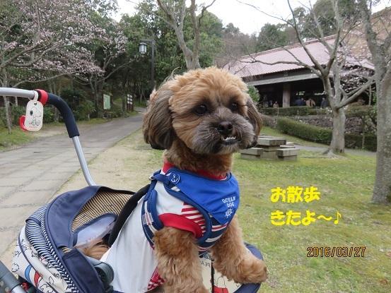 20160327お散歩