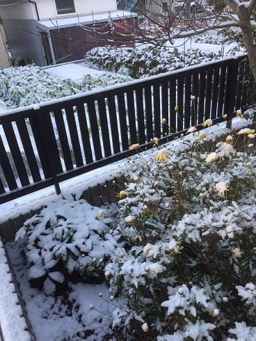 20170115雪庭