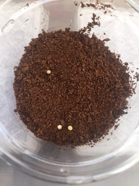 インター最後の採卵