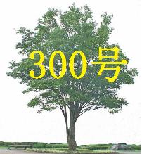 12月会報欅の木1