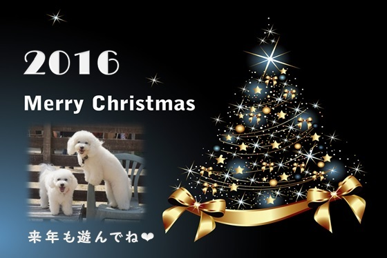 ミル&ララ 黒 2016クリスマスカード
