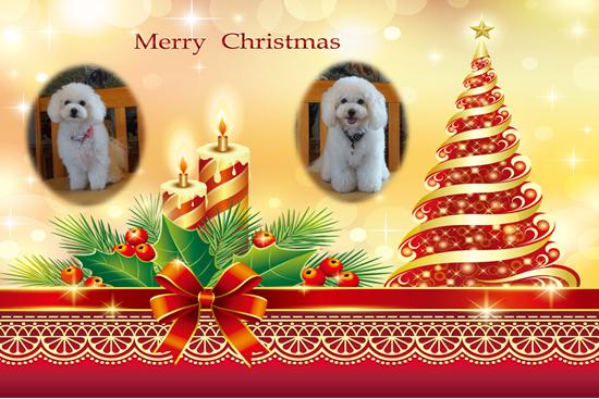 ミル&ララ 金 2016クリスマスカード
