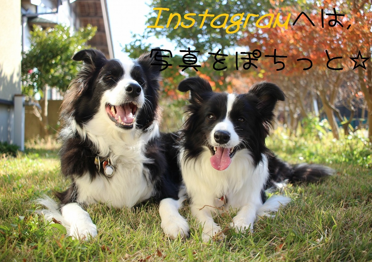 IMG_4044_201612171032037b2.jpg