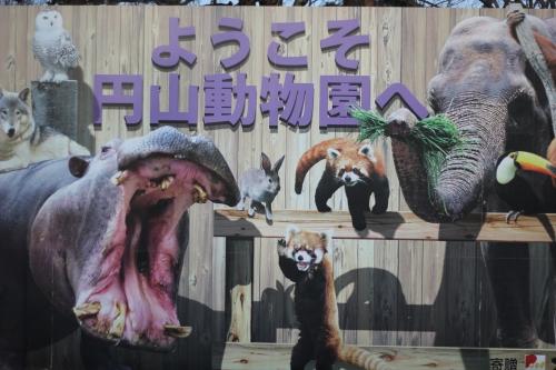 201612円山動物園 (157)