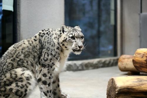 201612円山動物園 (184)